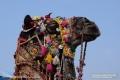 Indien-19-Pushkar_0013