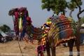 Indien-19-Pushkar_0045