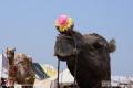 Indien-19-Pushkar_0047