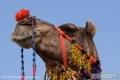 Indien-19-Pushkar_0050