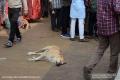 Indien-19-Pushkar_0093
