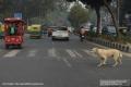 Indien-19-Delhi_0025