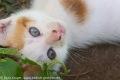 Rot weißes Katzenbaby