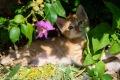 Rot weißes Katzenbaby im Gebüsch