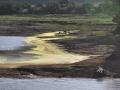 Krokodil am Mara Fluss