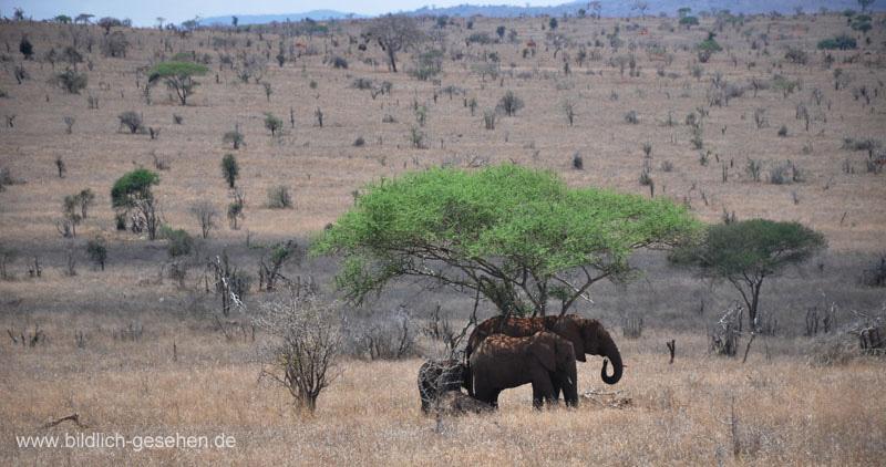 ke13-365-kenia-taita-hills-elefanten-unter-baum
