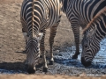 ke13-299-kenia-taita-hills-zebras