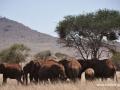 ke13-339-kenia-taita-hills-elefanten-unter-baum