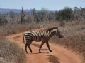 ke13-379-kenia-taita-hills-zebra
