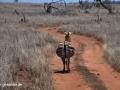 ke13-385-kenia-taita-hills-zebra